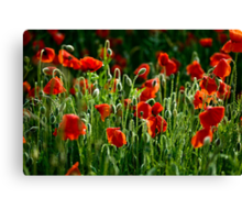 Poppies Remembered Canvas Print