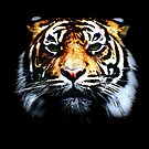 Tiger by Wayne Gerard Trotman