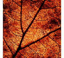 Scorched Earth Photographic Print