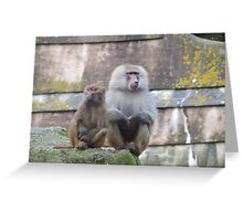 Baboons  romance ? Greeting Card