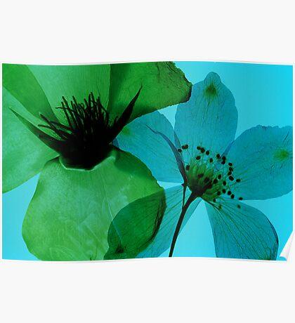 Green & Blue Poster