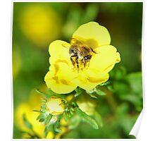 Pollen Bee Poster