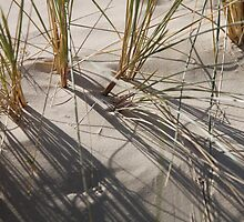 plant types #65, grass & sand by stickelsimages