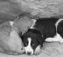 Stray dogs sheltering from rain under a ledge by Christine Oakley