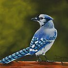 BlueJay by ddhabicht