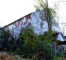 The Old Milk Barn by Colleen Friedman