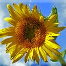 Blue sky Sunflower by Ms.Serena Boedewig