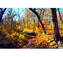 End of Fall Photographic Print