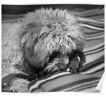 snuggle cuddle Poster