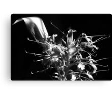 there be sweet ginger flowers in my garden of dreams Canvas Print