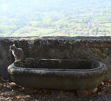 Cats eye view of Orvieto by lindart48