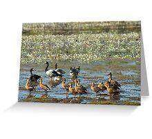 Geese and ducks in Kakadu NP wetlands Greeting Card