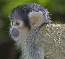 Cute baby (Monkey series 3) by John44