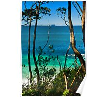 through the trees - jervis bay australia Poster
