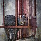 Grunge Cat by Kevin Bergen
