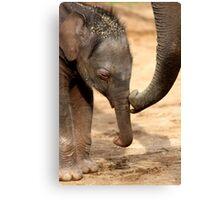Elephant Kiss Canvas Print