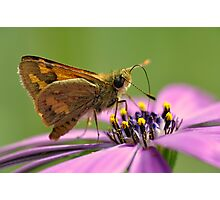 Purple Oasis  Photographic Print