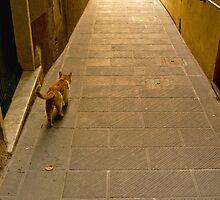 Cinque Terre Tom by Erin Kanoa