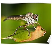 Robber Fly Poster