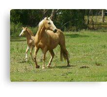 Quarter Horse Mare & Foal Canvas Print