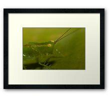 Green Grass Hopper Framed Print