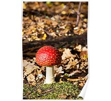 Solo Fly Agaric Poster