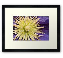 Vibrant Star Framed Print