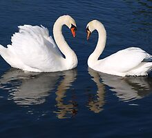 Love, swaning about. by shamusfrisbedog