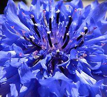 feeling blue by Floralynne