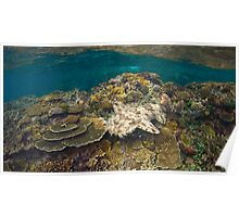 Tasselled Wobbegong - Camouflage on the Reef Poster