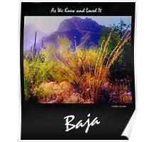 Baja - Golden Ocotillo Poster