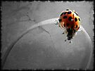 Ladybug Grunge by Shelly Harris