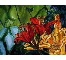 Red and Yellow Lilies Photographic Print