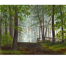 Foggy Morning in Woodland Photographic Print