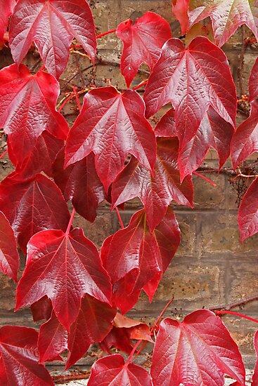Seeing red by Jeanne Horak-Druiff