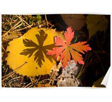 Autumn Shadow Poster