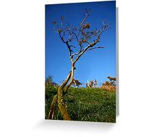 Twining Trees Greeting Card