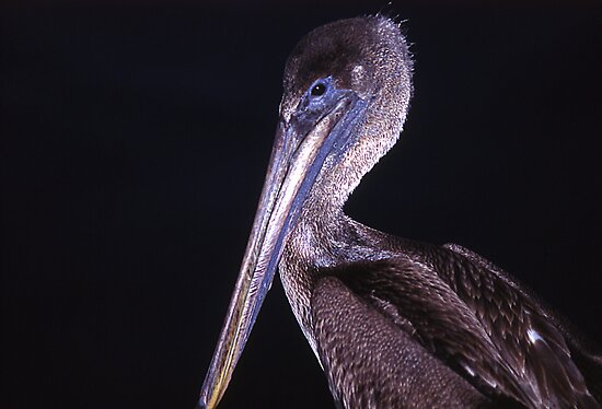 A most wondrous bird is the pelican by Mike Oxley