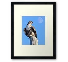 Red-Tailed Hawk and Moon Framed Print