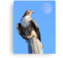 Red-Tailed Hawk and Moon Canvas Print