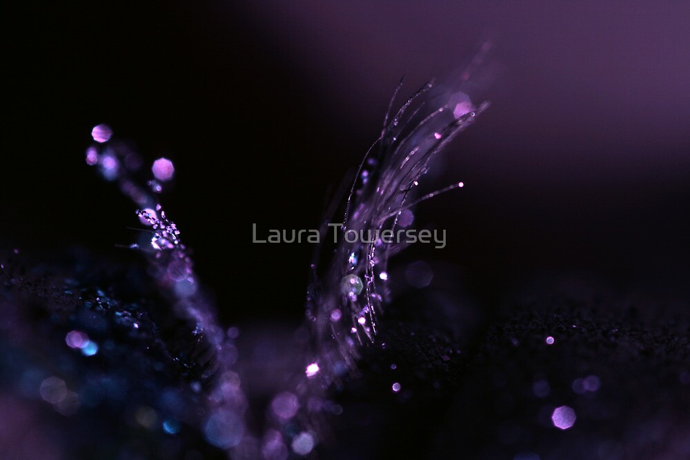 Fibre Optic by Laura Towersey