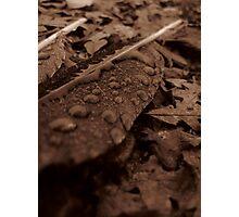 Macro feather Photographic Print