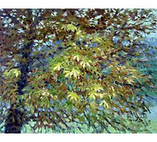 Chestnut Tree in October Photographic Print