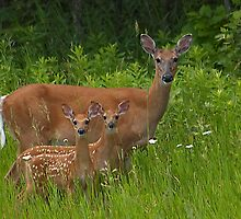 A Family of Deer by Tizme