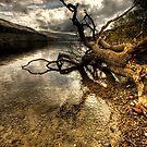Fallen Firkin Tree by De-aRt