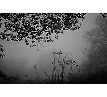 Winter's gloom Photographic Print