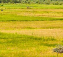 a wonderful Guinea-Bissau landscape Sticker