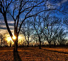 Winter at a Pecan Plantation by Justin Baer