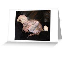 Macaw 4 Weeks Greeting Card