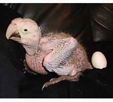 Macaw 4 Weeks Photographic Print